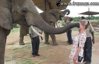 شوخی های بسیار خنده دار حیوانات با دخترها (عکس)