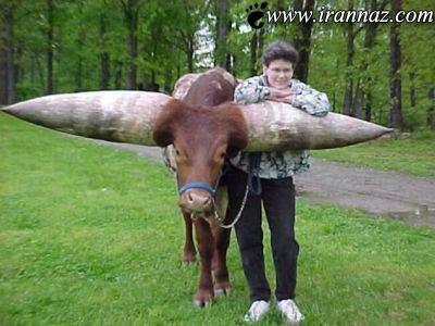عکس هایی دیدنی از بزرگترین و عجیب ترین شاخ دنیا!!