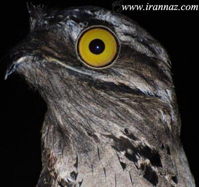 با پوتوس، پرنده عجیب و ناشناس آشنا شوید!! (عکس)