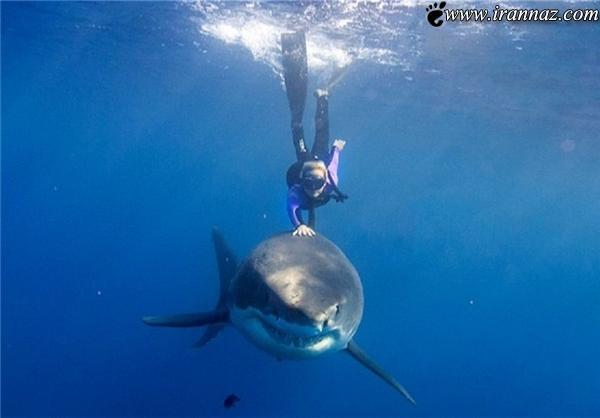 شنا کردن این زن شجاع با کوسه های خطرناک (عکس)