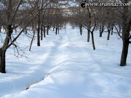 جاذبههای بسیار زیبای روستای افجه (عکس)