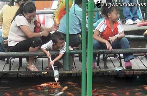 عکس های شگفت انگیز از ماهی های شیرخوار