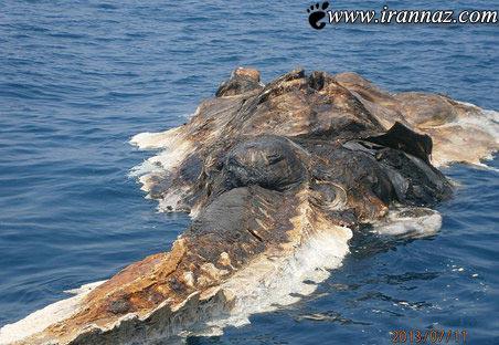عکس های شگفت آور از هیولای خلیج فارس
