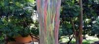 زیباترین درخت رنگارنگ در دنیا (عکس)