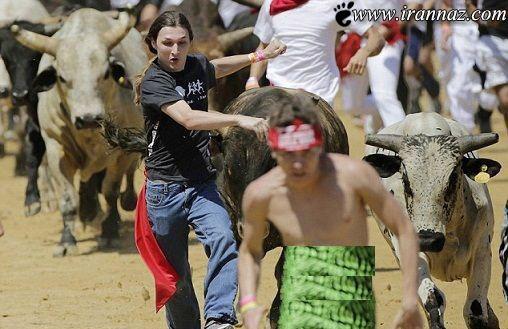 مسابقات گاوبازی و پایان خونین آن (عکس)