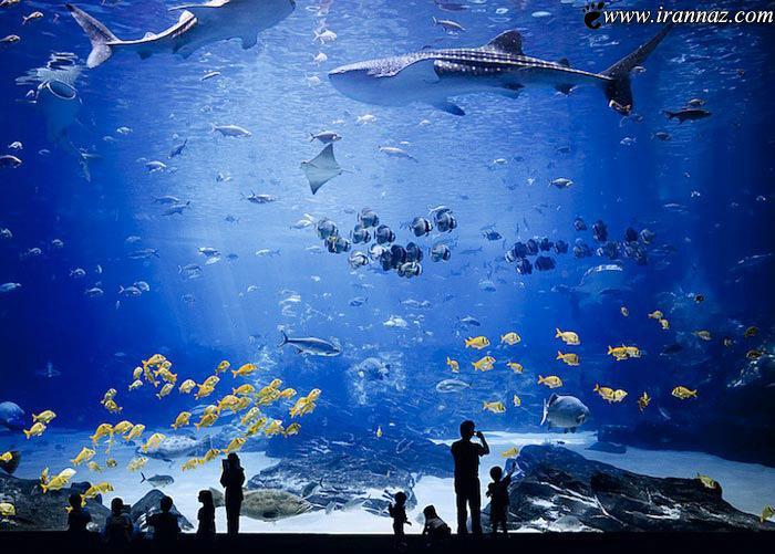عکس های باورنکردنی از بزرگترین آکواریوم دنیا