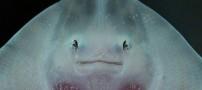 عکس های بسیار زیبا از ماهی های خندان