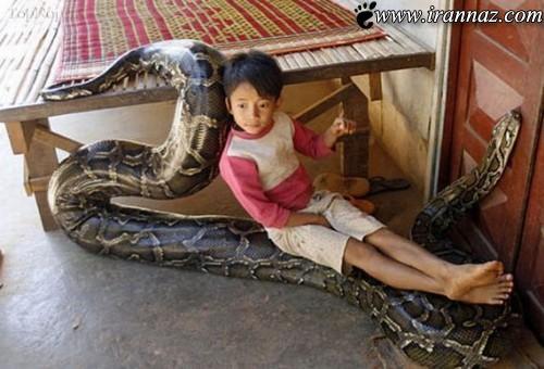 زندگی پسر بچه با بزرگترین مار دنیا (عکس)
