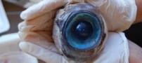 کشف تخم چشم بزرگی در سواحل فلوریدا (عکس)