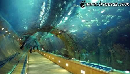 عاشقانه ترین و زیبا ترین تونل های دنیا