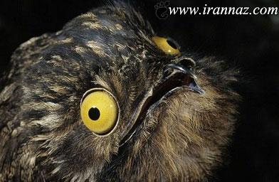 زشت ترین و ناشناخته ترین پرنده در دنیا (عکس)