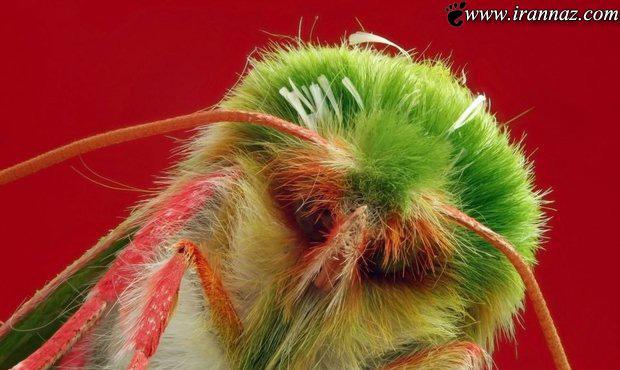 حشراتی که از نزدیک بسیارترسناک هستند (عکس)