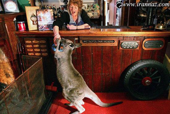 عکس های حیرت آور از زندگی با حیوانات عجیب و غریب