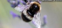 خارج شدن حشرات گزنده از داخل گوش (عکس)