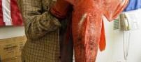 ماهی چندش آور با 200 سال سن صید شد (عکس)