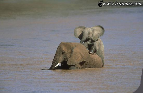 عکس های باور نکردنی و کمیاب از حیوانات زیبا