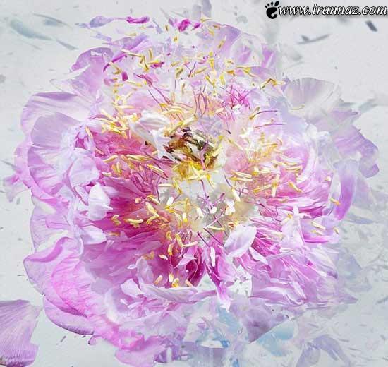 عکسهای ناب و دیدنی از شلیک کردن به گل های یخی
