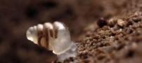 کشف حلزون بسیار زیبا و باورنکردنی (عکس)