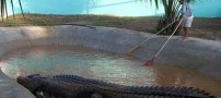 عکس های ترسناک از بزرگترین تمساح در جهان