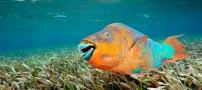 سه جانوری عجیبی که تغییر جنسیت می دهند (عکس)