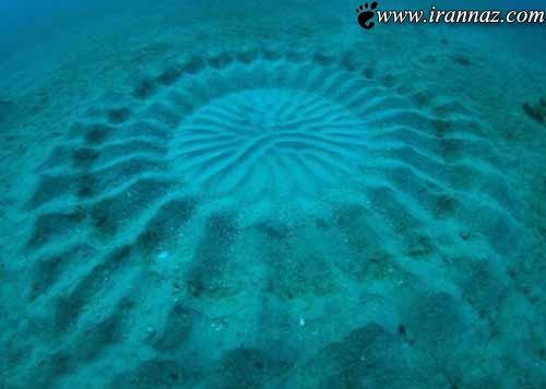 کشف جالب ماهی بند انگشتی هنرمند (عکس)
