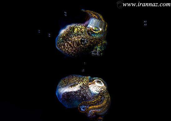 عکس های بسیار جالب از اختاپوس عجیب و غریب