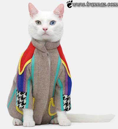 فشن شو گربه های خوش استایل برگزار شد (عکس)
