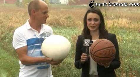 قارچی که بزرگتر از یک توپ بسکتبال است (عکس)