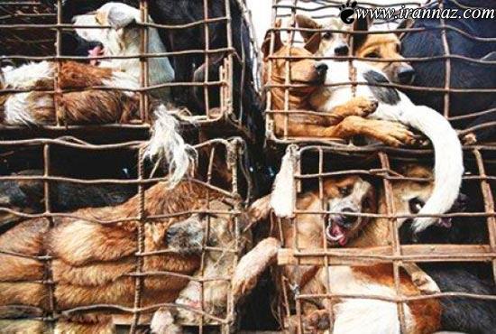 عکس های باورنکردنی از خوردن گوشت سگ در ویتنام
