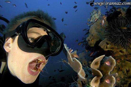 مسواک زدن دندان ها با میگوهای زنده (عکس)