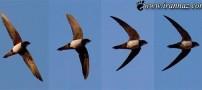 کشف پرنده ای که همه را متعجب ساخت (عکس)