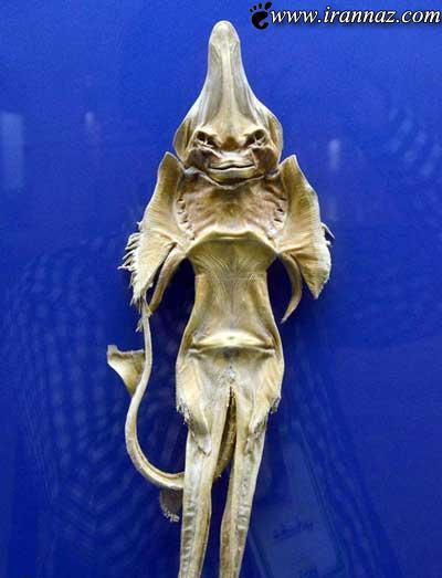 تا به حال ماهی شیطانی را دیده اید؟ (عکس)