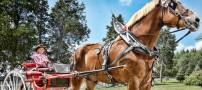 دیده شدن اسب 1180 کیلویی در آمریکا (عکس)