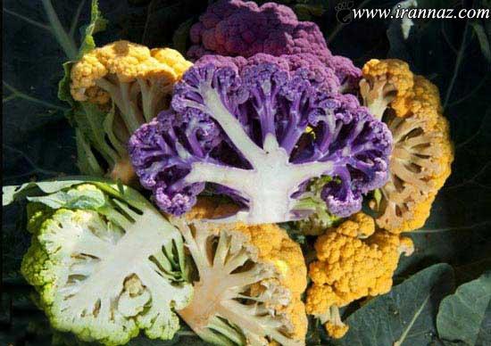 مزرعه ای با گل کلم های رنگی زیبا (عکس)