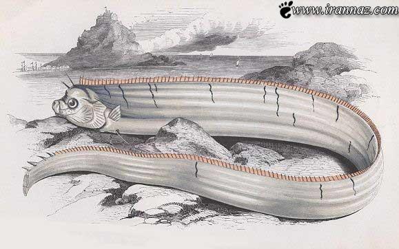 ماهی به این بزرگی را تا به حال دیده اید؟ (عکس)