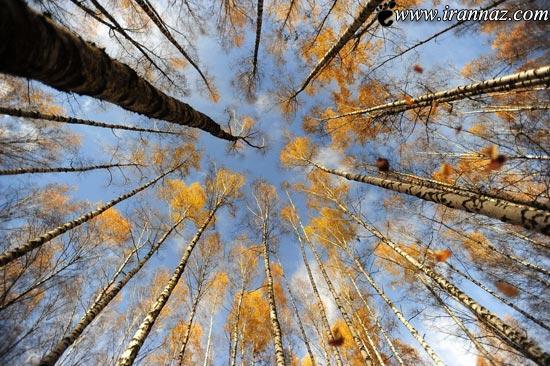 عکس های دیدنی روز دنیا (سری جدید)