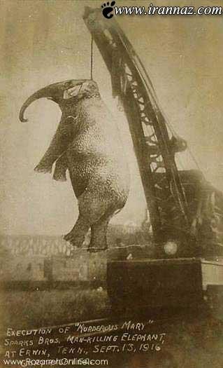 به دار کشیدن این فیل همه را شوکه کرد (عکس)