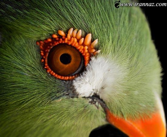 این پرنده ی بهشتی را از نزدیک ببینید (عکس)