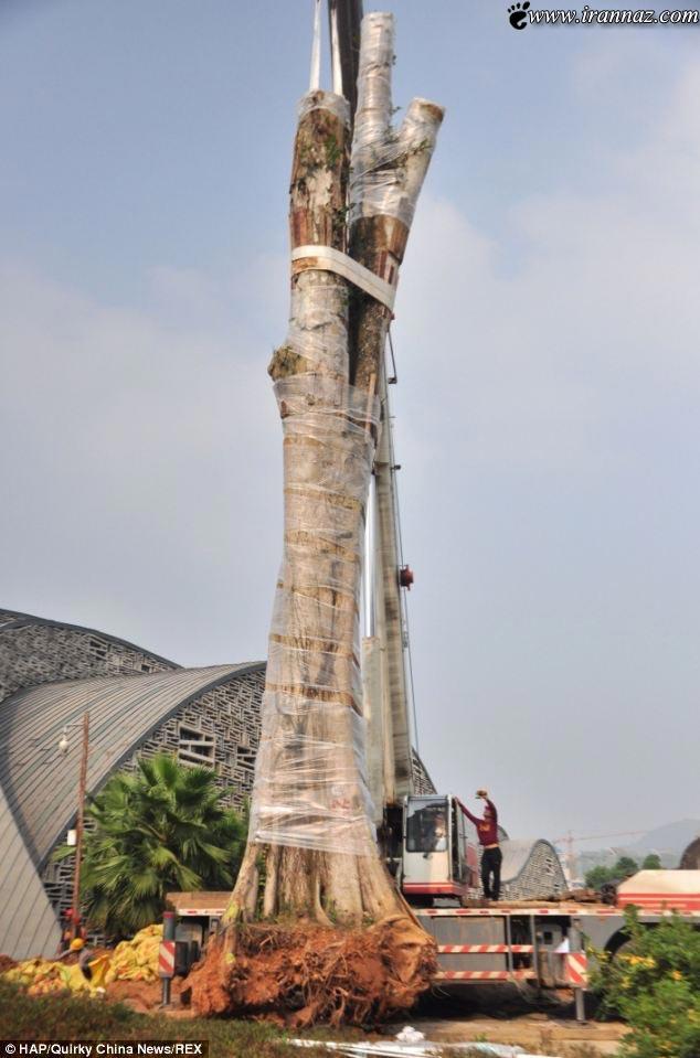 سرقت درخت 26 تنی در دنیا خبر ساز شد (عکس)
