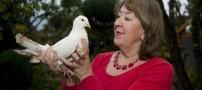 بالاخره پیر ترین کبوتر دنیا پیدا شد (عکس)