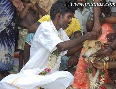 ازدواج بی رحمانه ی دختر 9 ساله با سگ ولگرد (عکس)