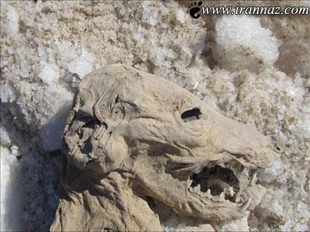 جسد حیوان ناشناخته مردم را وحشت زده کرد (عکس)