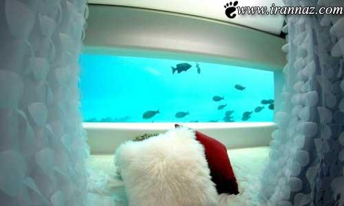 عکس هایی از زندگی با ماهی های بی نظیر