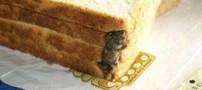 پخته شدن این موش بیچاره در نان صبحانه (عکس)