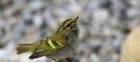 عجیب ترین گونه ی پرنده در ایران کشف شد (عکس)