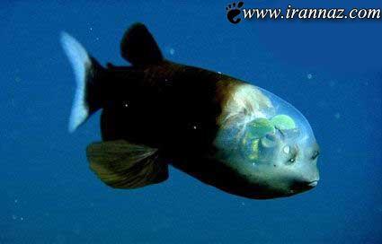 این ماهی حیرت آور همه را متعجب ساخت (عکس)