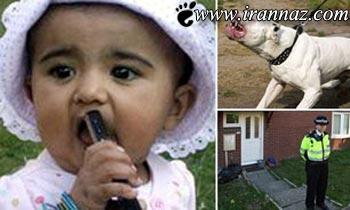 این دختر بچه زیبا توسط این سگ خورده شد (عکس)