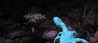 این عقرب شب رنگ شما را شگفت زده میکند (عکس)