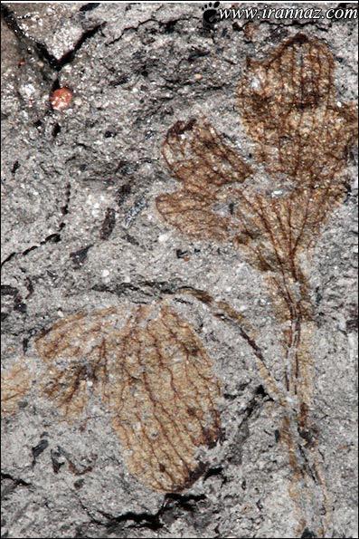 اولین گیاه بوجود آمده روی زمین را ببینید (عکس)