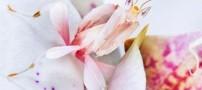 اینها حشره هستند یا گل شما می دانید؟ (عکس)